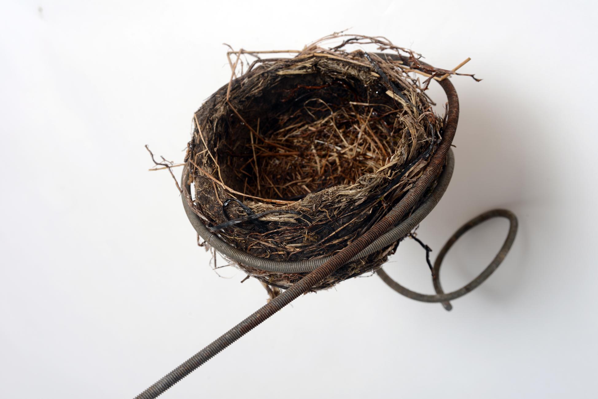 bd-nest-detail