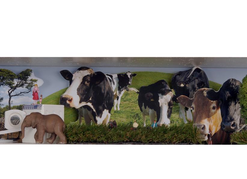 life-cows