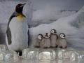 penguins-web